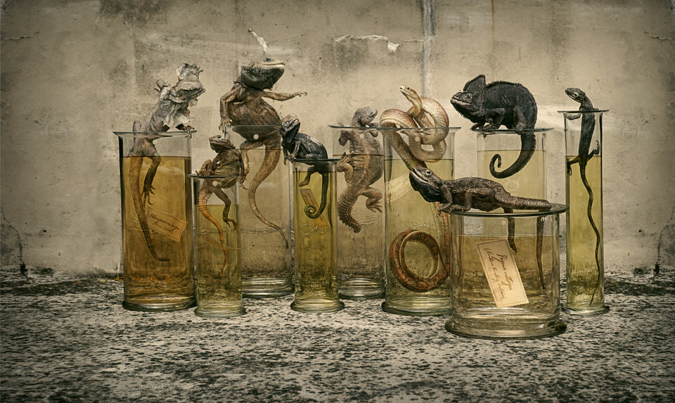 Fine Taxidermy on Markus Walter's art blog